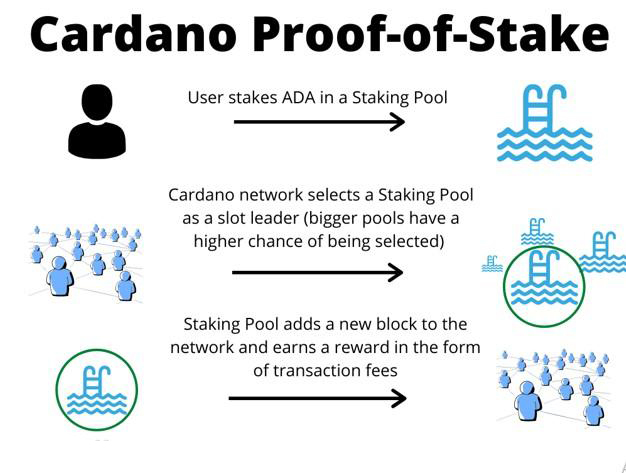 Image showing how fees are generated on the Cardano network